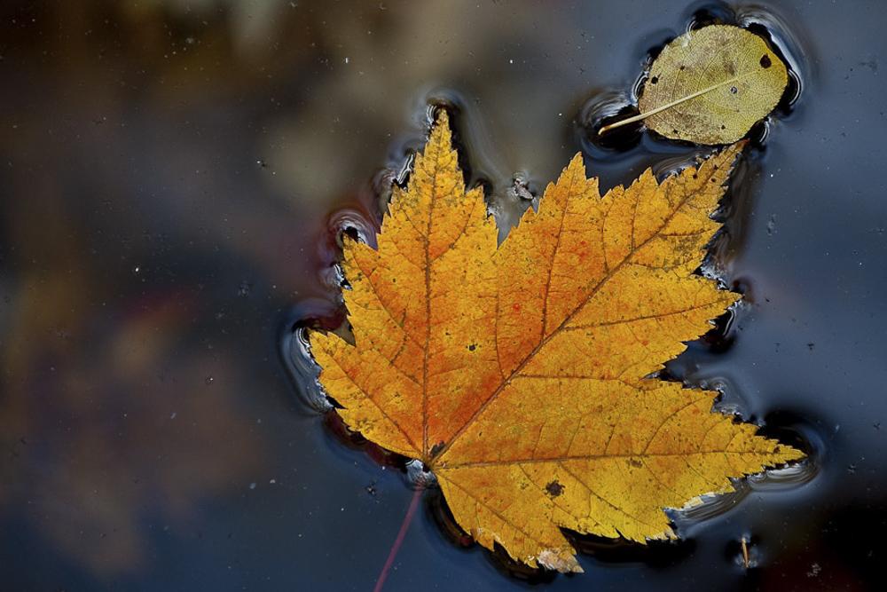 Fallen Canadian